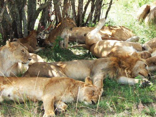 世界一周マサイマラ国立公園サファリ_24.jpg