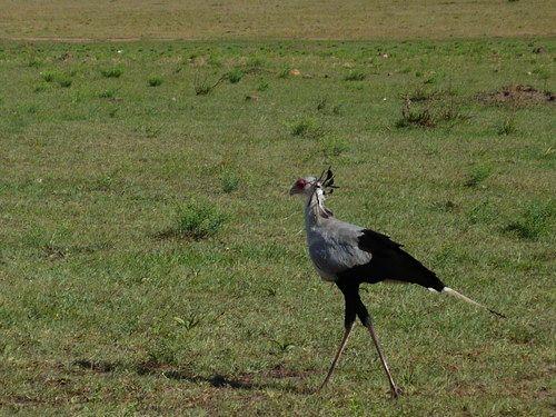 世界一周マサイマラ国立公園サファリ_26.jpg
