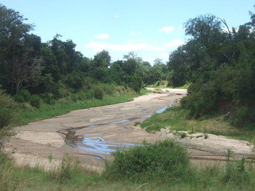 世界一周マサイマラ国立公園サファリ_3.jpg