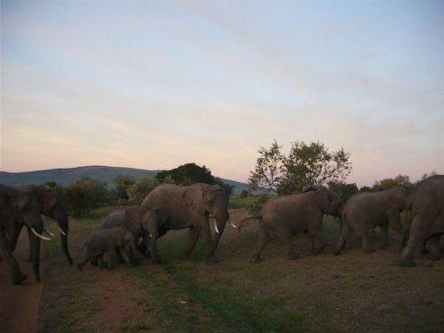 世界一周マサイマラ国立公園サファリ_40.jpg