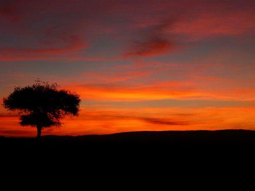 世界一周マサイマラ国立公園サファリ_41.jpg
