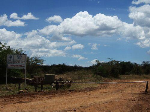 世界一周マサイマラ国立公園サファリ_7.jpg