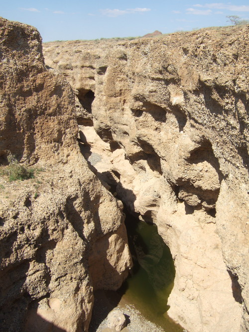 世界一周ナミブ砂漠1_14.jpg