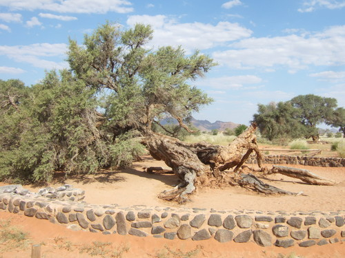 世界一周ナミブ砂漠1_15.jpg