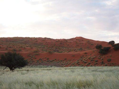 世界一周ナミブ砂漠1_20.jpg