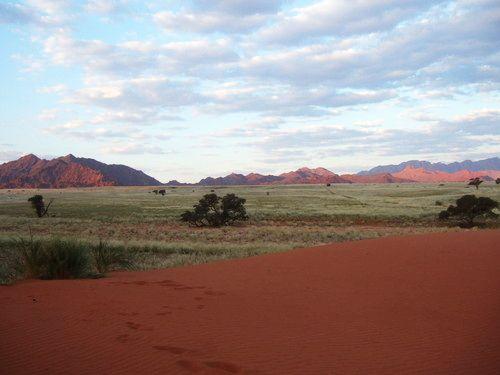 世界一周ナミブ砂漠1_22