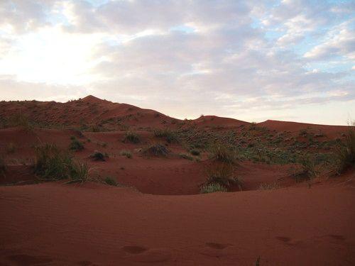 世界一周ナミブ砂漠1_23.jpg