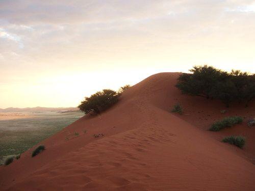 世界一周ナミブ砂漠1_24.jpg