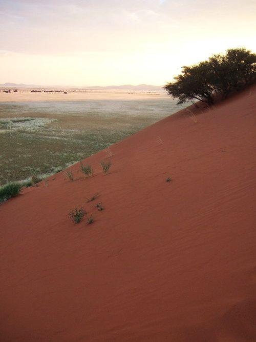 世界一周ナミブ砂漠1_26.jpg