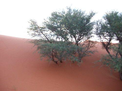 世界一周ナミブ砂漠1_27.jpg