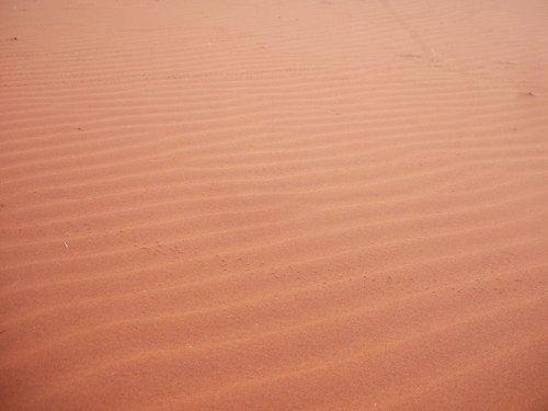 世界一周ナミブ砂漠1_29.jpg