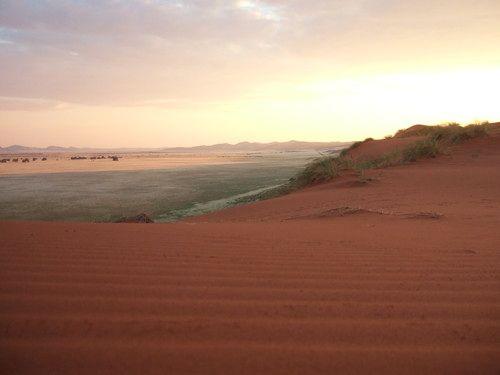 世界一周ナミブ砂漠1_31.jpg
