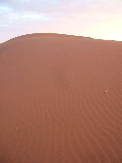 世界一周ナミブ砂漠1_33.jpg