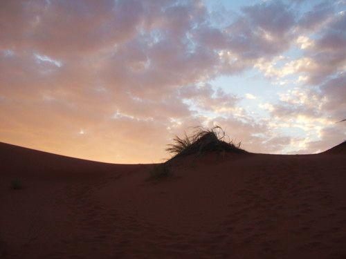 世界一周ナミブ砂漠1_36.jpg