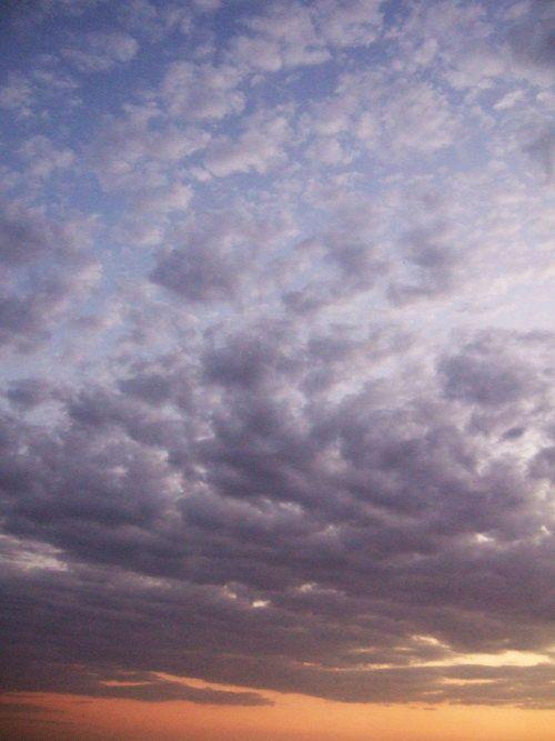 世界一周ナミブ砂漠1_38.jpg