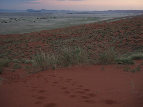 世界一周・ナミブ砂漠1_39.jpg