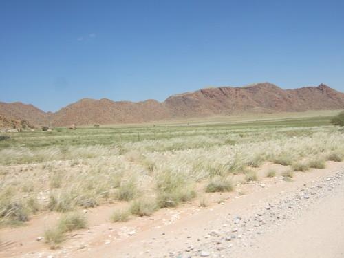 世界一周ナミブ砂漠1_5.jpg
