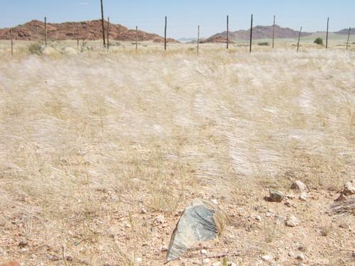 世界一周ナミブ砂漠1_7.jpg