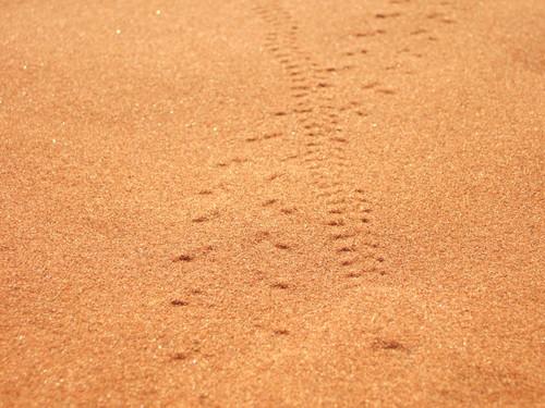 世界一周・ナミブ砂漠2_20.jpg