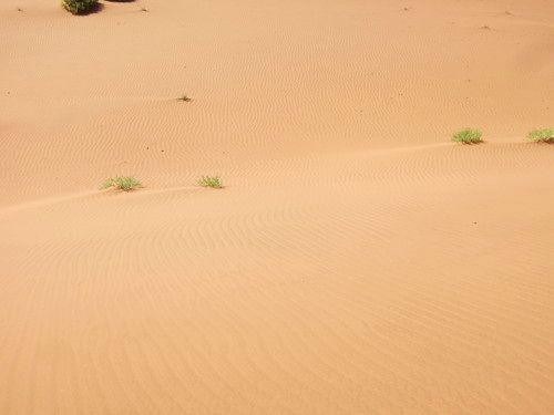 世界一周・ナミブ砂漠3_10.jpg