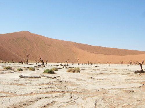 世界一周・ナミブ砂漠3_19.jpg
