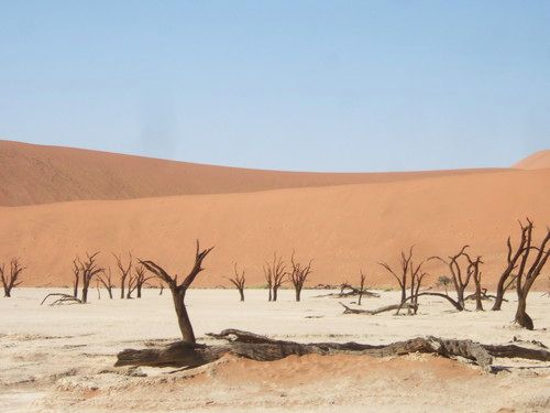 世界一周・ナミブ砂漠3_20.jpg