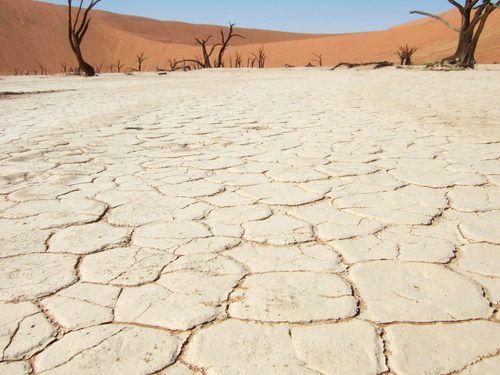 世界一周・ナミブ砂漠3_21.jpg