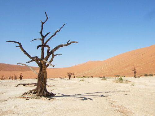世界一周・ナミブ砂漠3_22