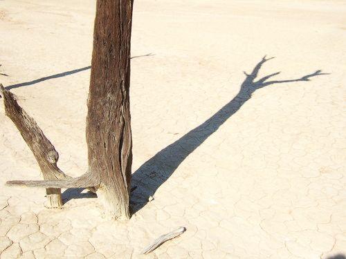 世界一周・ナミブ砂漠3_23.jpg