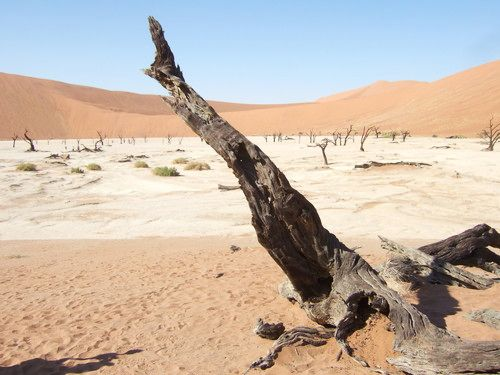 世界一周・ナミブ砂漠3_24.jpg