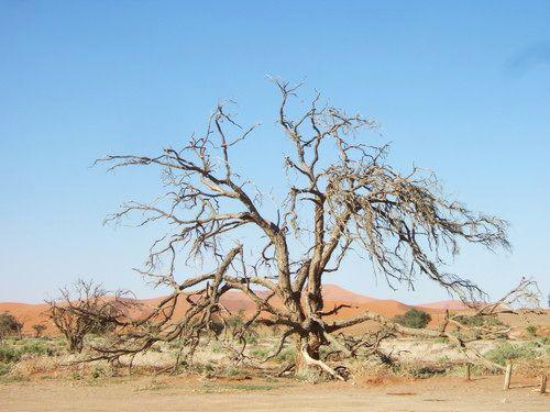 世界一周・ナミブ砂漠3_3.jpg