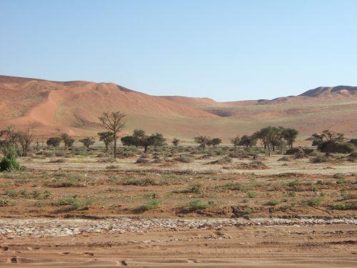 世界一周・ナミブ砂漠3_4.jpg