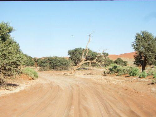 世界一周・ナミブ砂漠3_5.jpg