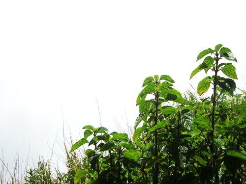 世界一周・ビクトリアの滝・世界三大瀑布_38.jpg