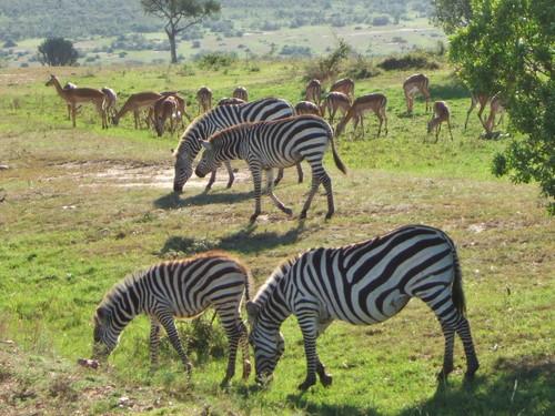 世界一周ケニア24