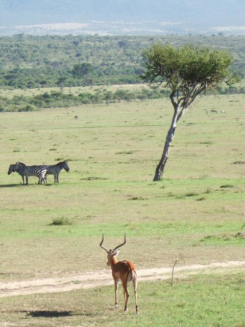 世界一周ケニア44