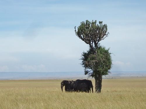 世界一周ケニア47