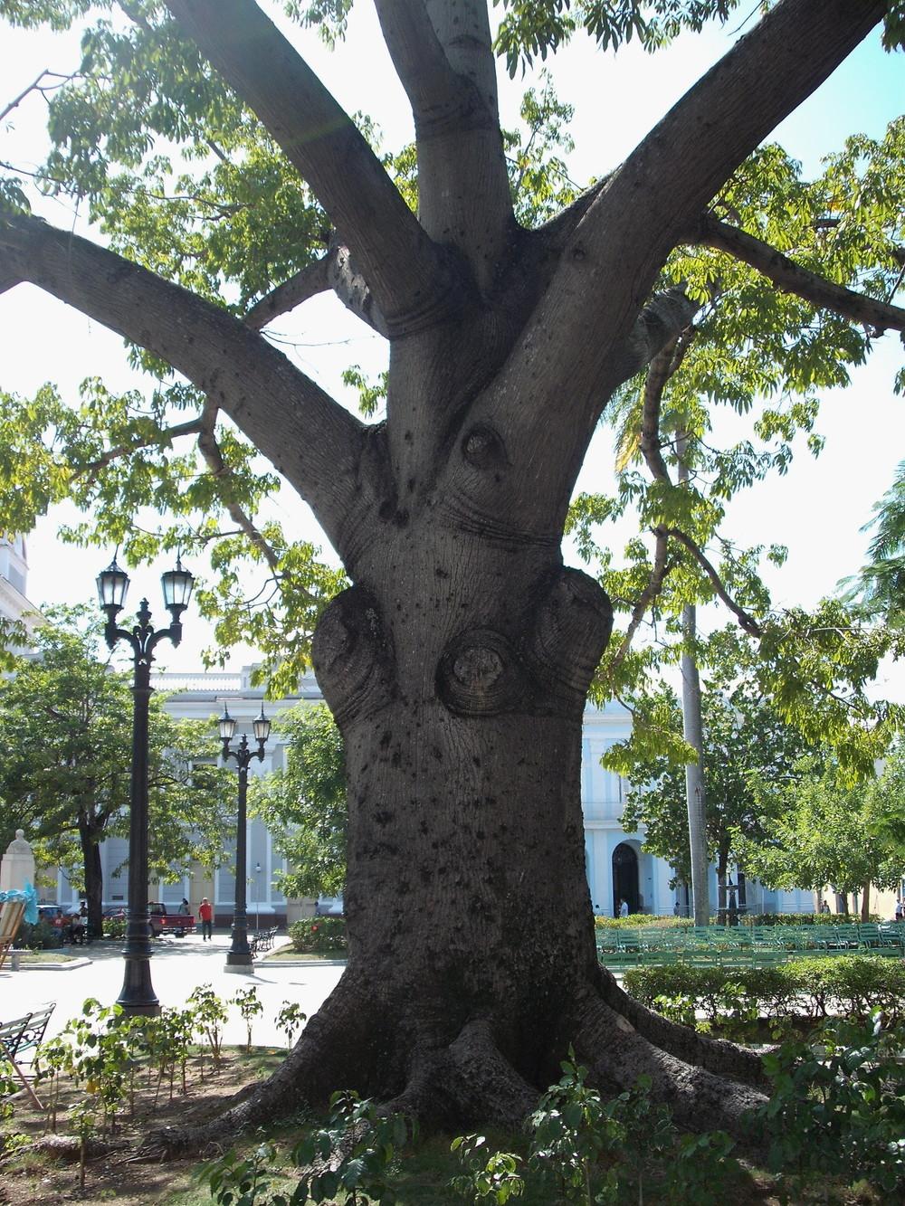 世界一周・キューバ・シエンフエゴス観光_32.jpg