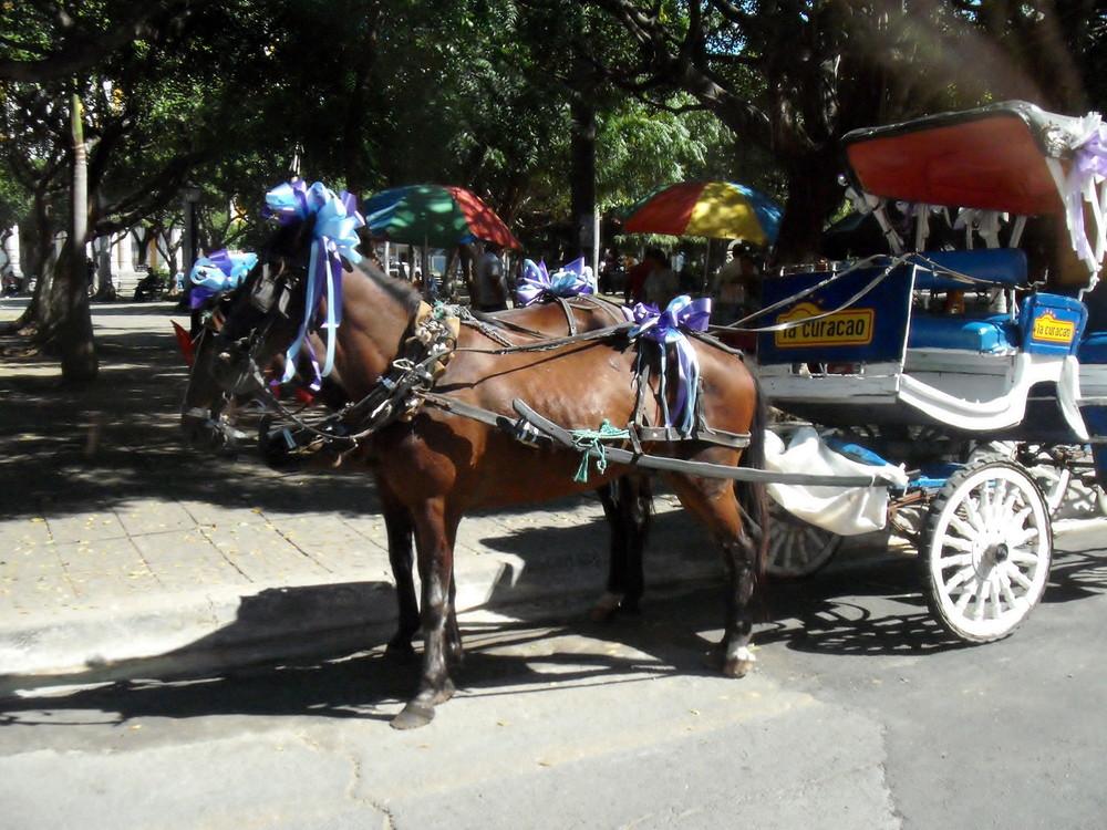 世界一周・ニカラグア・グラナダ観光2_14.jpg