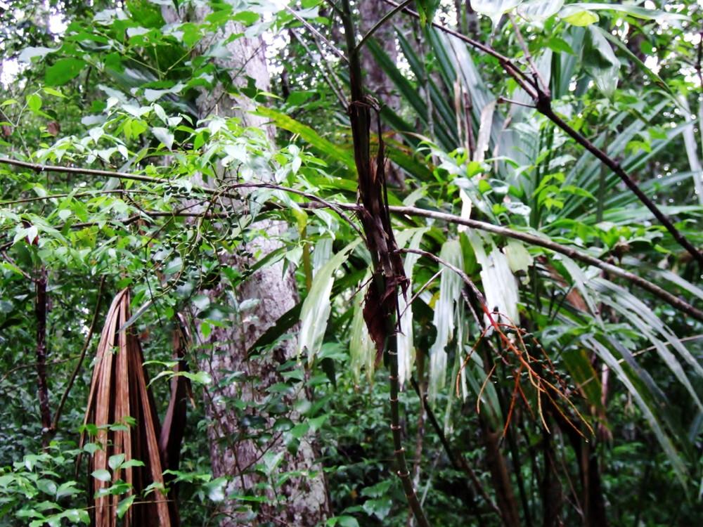 世界一周・グアテマラ・世界遺産ティカル観光_6.jpg