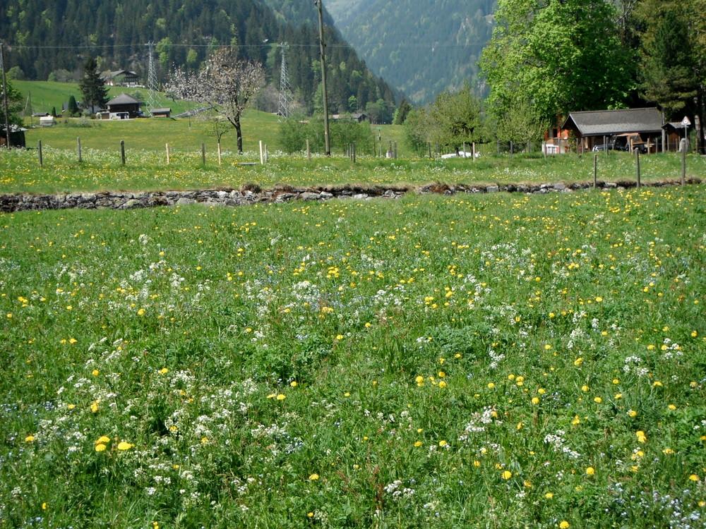 スイス旅行・グリンデルワルド観光_39.jpg