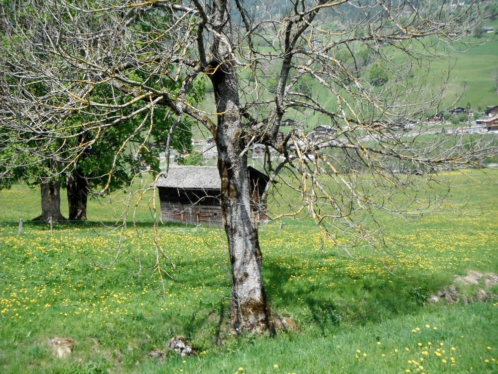 スイス旅行・グリンデルワルド観光_45.jpg