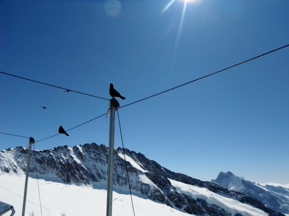 スイス旅行・ユングフラウ観光2_9.jpg