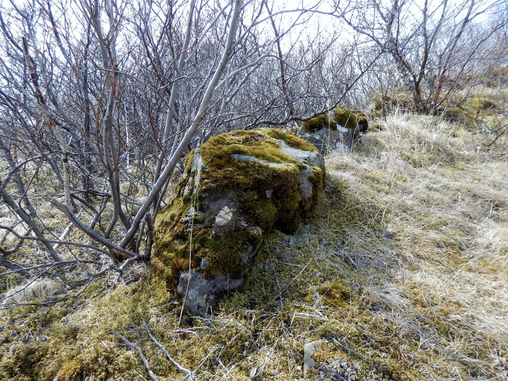 北欧旅行アイスランド・スカフタフェットル国立公園_12