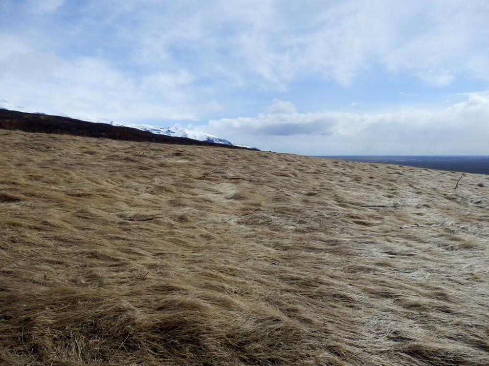 北欧旅行アイスランド・スカフタフェットル国立公園_19