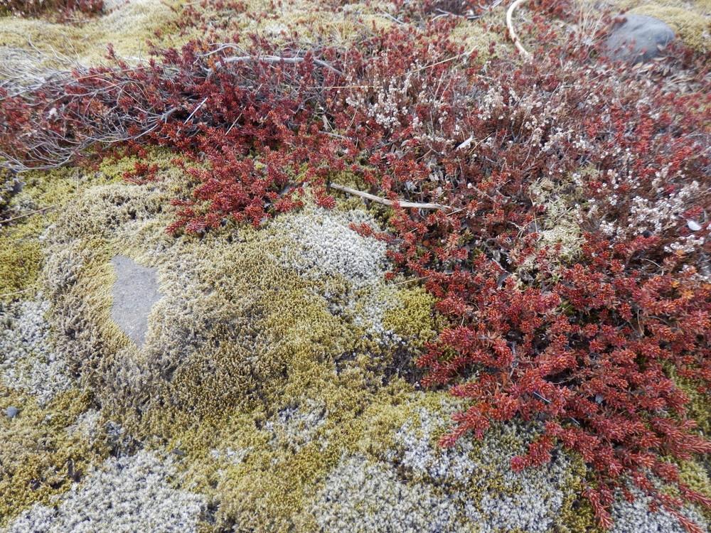 北欧旅行アイスランド・スカフタフェットル国立公園2_13