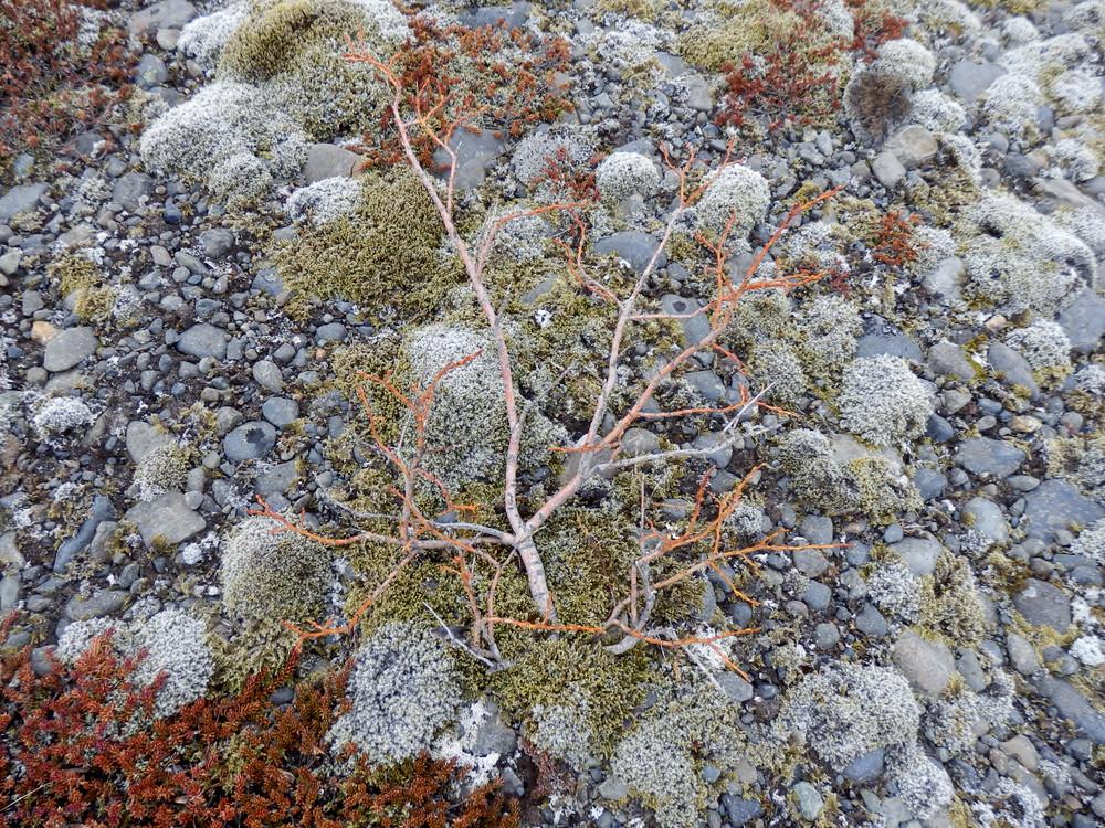 北欧旅行アイスランド・スカフタフェットル国立公園2_26