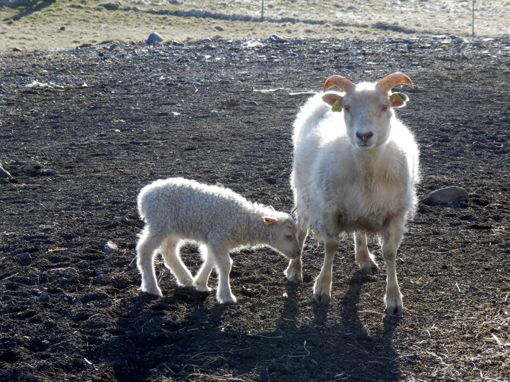 北欧旅行アイスランド・ヴィーク_26